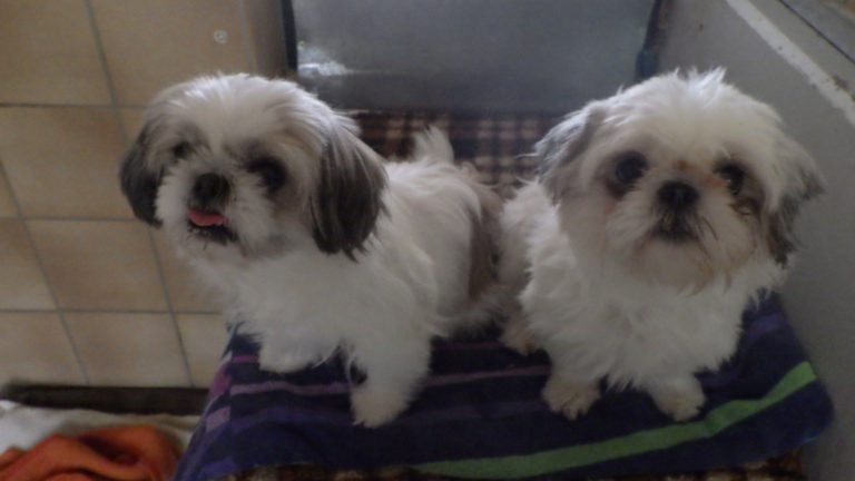 Rosi (links) und Quenne (rechts)