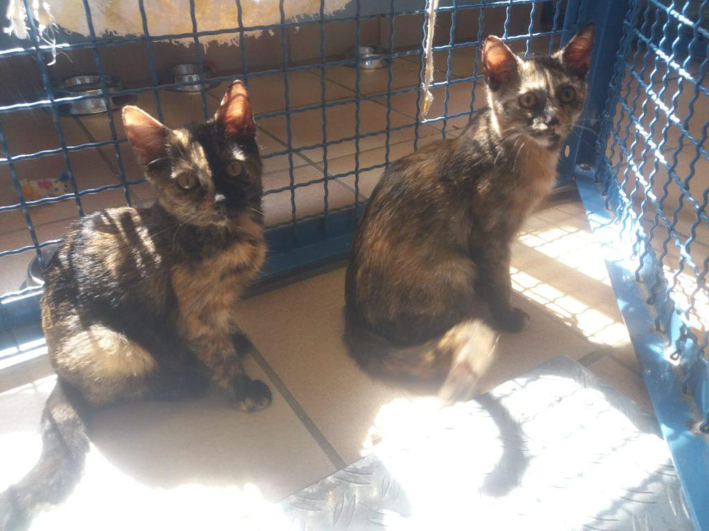 Raja und Ronja