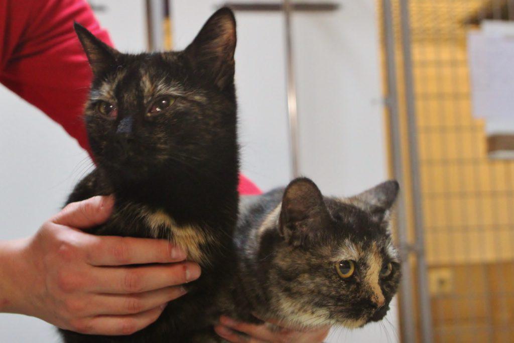 Deliah (links) und Melody (rechts)