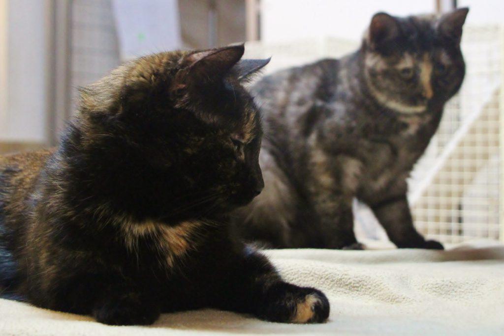 Deliah (vorne) und Melody (hinten)