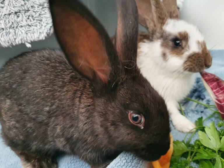 Trüffel (schwarz) & Olga (braun-weiß)